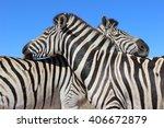 two zebras nuzzle against each... | Shutterstock . vector #406672879
