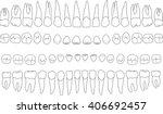 Anatomically Correct Teeth  ...