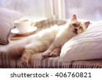 Stock photo color point cat lying on pillow near the window in living room 406760821