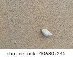 fossil shell on the sand beach | Shutterstock . vector #406805245