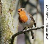 cheerful male european robin ... | Shutterstock . vector #406819645