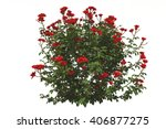 Stock photo rose isolated d rendering 406877275