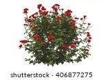 rose isolated 3d rendering | Shutterstock . vector #406877275
