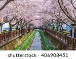 Cherry Blossom At Yeojwacheon...
