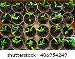 the beautiful little seedlings... | Shutterstock . vector #406954249