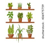 Set Of House Plant Isolated...