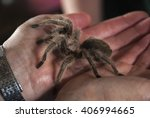 Pet Tarantula Spider In Palm O...