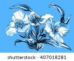 aquilegia  granny's connet or... | Shutterstock . vector #407018281