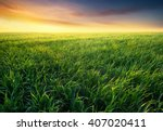 grass on the field during... | Shutterstock . vector #407020411