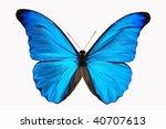 Vivid Blue Morphy Butterfly An...