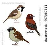 Bird Sparrow Set Cartoon Vector ...