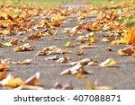 Fallen  Yellow  Maple Leaves On ...
