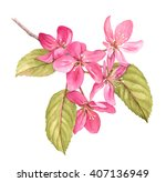 pink tree in blossom watercolor ... | Shutterstock . vector #407136949