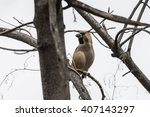 hawfinch sits among the... | Shutterstock . vector #407143297