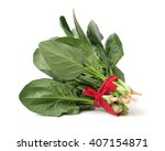 spinach on white background | Shutterstock . vector #407154871