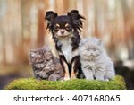 Stock photo chihuahua dog with two fluffy kittens outdoors 407168065