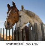 Horses Animals Affections Farm...
