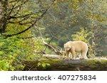 spirit bear  ursus americanus... | Shutterstock . vector #407275834