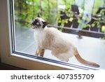 mewing cat at balcony door | Shutterstock . vector #407355709