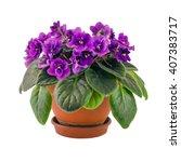 Violet Purple Flower In A Pot...