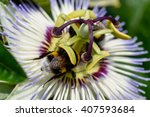 Close Up Of Bumble Bee Under...