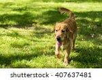 dog in action on the grass | Shutterstock . vector #407637481