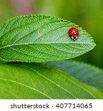 Ladybug On Leaf. Ladybug...