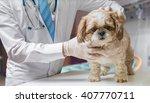 Stock photo veterinarian doctor is examining dog in veterinary 407770711