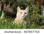 Stock photo ginger female cat playing in a garden 407857765