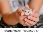Stock photo hamster hold hands girl held stance that it will deliver to the people who want to feed the hamster 407859247