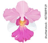 Pink Orchid Vector Illustratio...