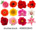 single flower head. rose ... | Shutterstock . vector #408002845