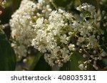 white little flowers | Shutterstock . vector #408035311