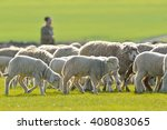 A Shepherd Is Leading His Floc...