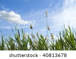 High Reed Against Cloudy Sky I...