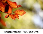Red Leaves With Beautiful Boke...