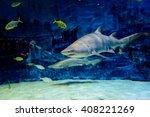 real shark at the beijing... | Shutterstock . vector #408221269