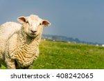 romney marsh sheep on marshland | Shutterstock . vector #408242065