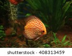 exotic colored fish in the wild | Shutterstock . vector #408313459