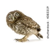 Stock photo young owl in front of a white background 4083319