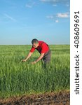 Small photo of Farmer or agronomist inspect quality of wheat in early spring and late afternoon