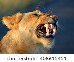 lion grimace  kruger national... | Shutterstock . vector #408615451