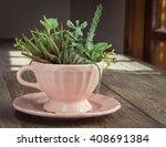 succulent   cactus teacup... | Shutterstock . vector #408691384