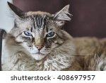 Small photo of Bad cat: royal, cruel and despotic.