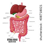 the part of internal human... | Shutterstock . vector #408718021