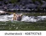 Small photo of grizzly bear swimming across a river in the wilderness