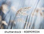 beautiful serene waving reed in ...   Shutterstock . vector #408909034