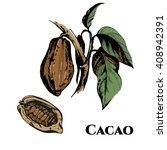 hand drawn theobroma cacao... | Shutterstock .eps vector #408942391