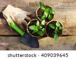 the beautiful little seedlings... | Shutterstock . vector #409039645