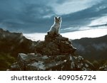dog sits on a rock in the... | Shutterstock . vector #409056724